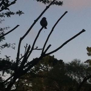 stowlakebird